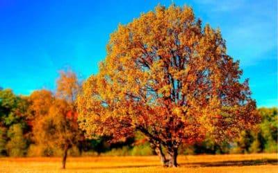 Cómo crear un árbol de decisiones